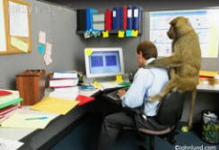 Picture of a man working in an office with a monkey on his back
