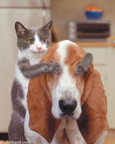 funny animal pic of dog and cat