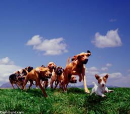 small dog leading pack of dogs of different breeds