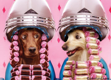 Animal Antics - Photo of dogs in a beauty salon sitting under the hair dryers gossiping