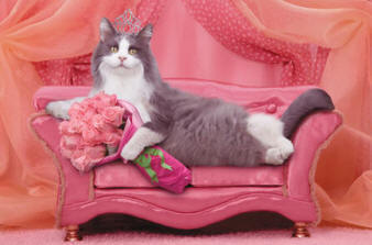 Adorable cute kitten photo of a cat laying on a couch wearing a tiara with a boquet of flowers