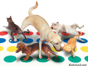 cats and dogs playing the game twsister - An animal antics photo