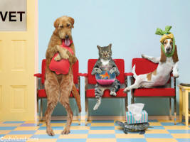 Dogs, cats, birds, fish and turtles wait to see the vet in the Veterinarian's waiting room - An animal antics picture