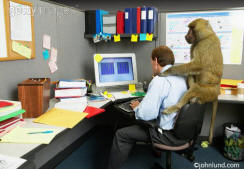 stock photo of a monkey on a mans back. The man is seated at his office desk working at his computer.