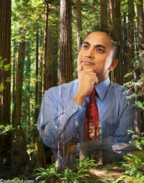 a Green stock photo background image of a businessman composited into a redwood forest