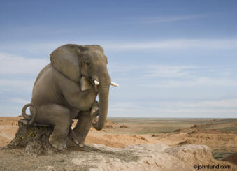 This background stock photo is of an elephant sitting on a tree stump posed as Rodin's Thinker