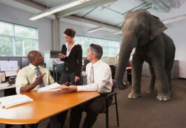 Pictures of the elephant in the room being ignored during a business meeting