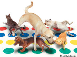 "humorous picture of cats and dogs playing the game ""Twister"""