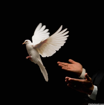 A White dove is released from a magician's hands symbolizing peace and freedom