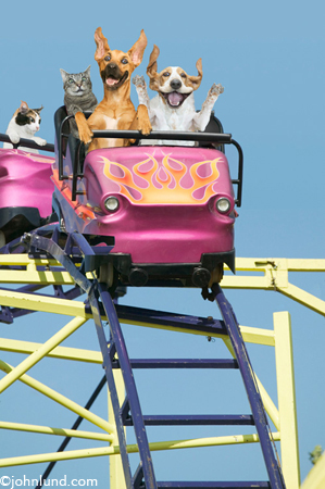 silly picture of dogs on a roller coaster ride