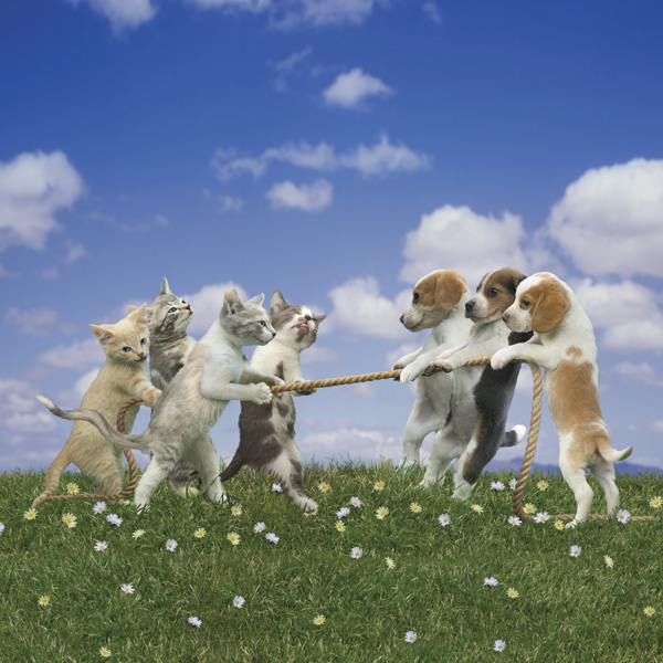 picture of dogs and cats playing tug of war