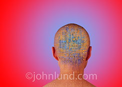 AI or artificial intelligence is portrayed in this stock photo of the back of a person's head filled with intricate and complex computer circuitry.