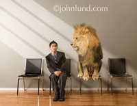 An angry lion looks down on the scared and frightened man sitting next to him in a waiting room, a photo about fear, competition and dominance. Man is Asian.
