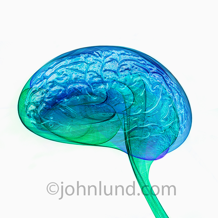 Artificial Intelligence is the primary concept behind this futuristic stock photo of the human brain showing the flow of energy around a brain with a metallic quality.