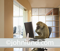A Monkey, or rather a Baboon, is using a computer, in an office setting, in this humorous image about the drudgery and un-creative work that so often is a part of corporate life.