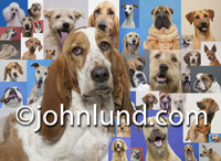A Basset Hound's Portrait is superimposed over a background of various other dog breed portraits. Some of the breeds of dogs include are a Charpei, a German Shepard, a Daschound, a Bloodhound, a Jack Russell Terrier, a Whippet, A Ridgeback and a Poodle.