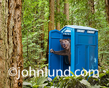 An anthropomorphic bear wears a shocked expression as he looks out of the porta potty or outhouse that he has just been using in the woods in a humorous greeting card image.