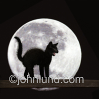 LOL cat picture of A black kitten arches his back in front of a full moon and hisses while standing on a fence rail at night.
