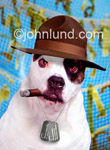 Funny animal antics and lifestyle picture and stock photo of a bulldog with a cigar in his mouth and a drill sargent's hat and dog tags around his neck.