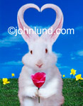 Funny picture of a silly rabbit. with it's ears forming the shape of a heart against a blue sky background with brigh yellow flowers and grass. The bunny is holding a flower.