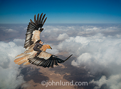 A woman in business attire and scanning the scene through binoculars, flies over the clouds on the back of a huge bird of prey in a stock photo about leadership, daring, vision and navigating cloud computing.