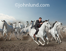 A businessman rides a galloping white horse in front of a stampeding herd in an image about initiative, courage,leadership and all things wild and free.