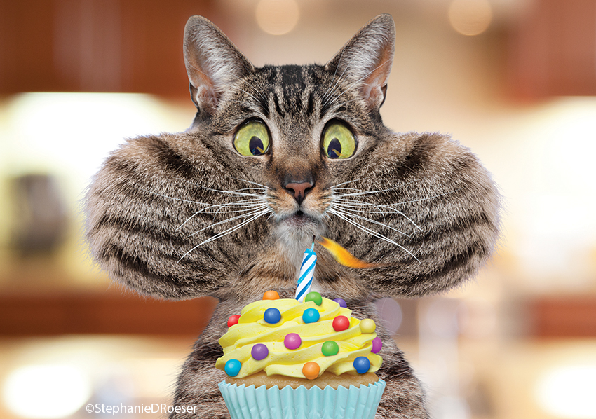 A tabby cat has his cheeks puffed way out as he blows out a birthday candle from a cupcake in a funny cat photo.