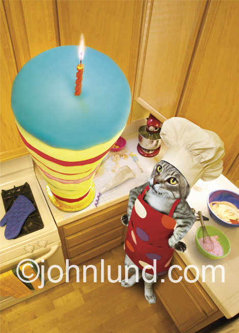 Funny animal picture and stock photo of a cat with a very tall cake. This cute cat has baked a giant birthday cake with a single candle on top.