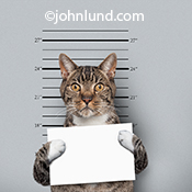 A funny cat with an expression of shock holds up a placard during a police mug shot in a humorous image for stock, advertising and greeting cards.