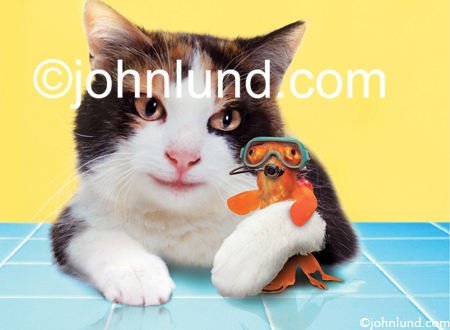 Stock photo of a cat with a goldfish friend. The goldfish is wearing a face mask while the Calico kitty has his arm around the little guy.