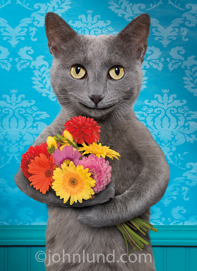 Mothers day flowers are presented by a gray cat in a happy mothers day greeting card image.