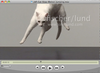 A white cat lands from a jump in a super slow motion video clip