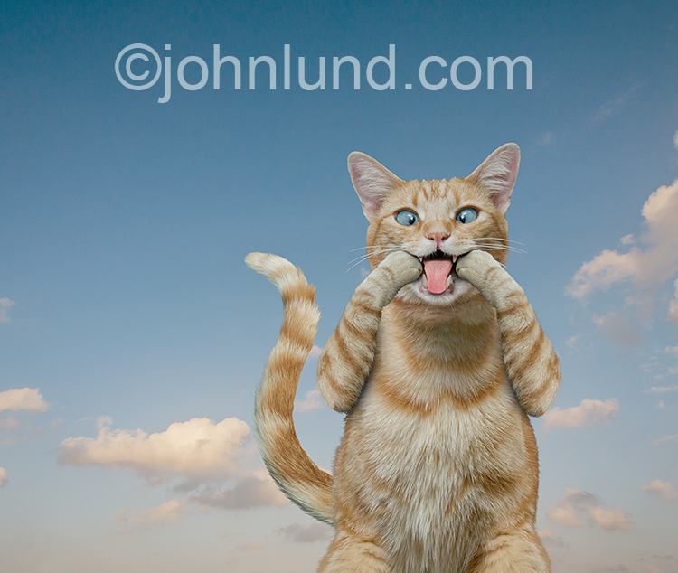 "A cat stretches his mouth with his paws making a ""raspberry"" expression in this funny cat stock photo and greeting card image."