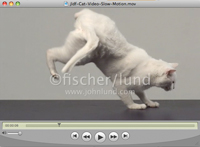 Stock video clip of a cat landing on his feet in super slow motion shot at 1000 frames per second with a Phantom HD camera
