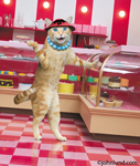 A cat wearing a necklace and hat stands in front of the display case in a bakery in a funny cat pic.