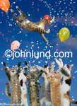 Stock photo and funny animal picture of cats celebrating and having a party. The funny cat image of a celebratory group of cats, complete with confetti and balloons, is available as both a greeting card.