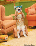Maude the cat sits in a living room, wearing a necklace and a hat, and looking surprised and delighted