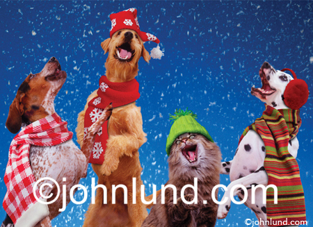 Three dogs and a cat sing Christmas carols in this funny animal pic featuring pets wearing mufflers, caps and ear warmers.