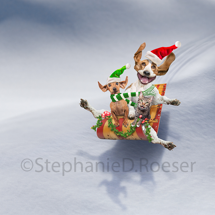 Two dogs and a cat catch air as they sled donw a snowy slope and wearing Christmas finery in a humorous Christmas greeting card.