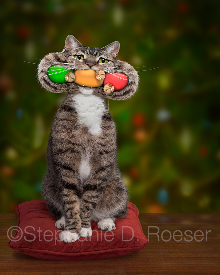 A Christmas tabby cat sits in front of a Christmas tree with his mouth stuff full of ornaments in a humorous greeting card image and stock photo.