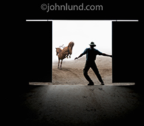 A man closes a barn door after the horse is gone in this humorous photo that shows the hindquarters of the horse as it gallops away.