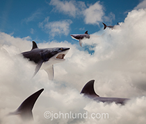 Sharks roam the clouds in this funny picture depicting the potential dangers of online and cloud computing. Great White sharks no less!