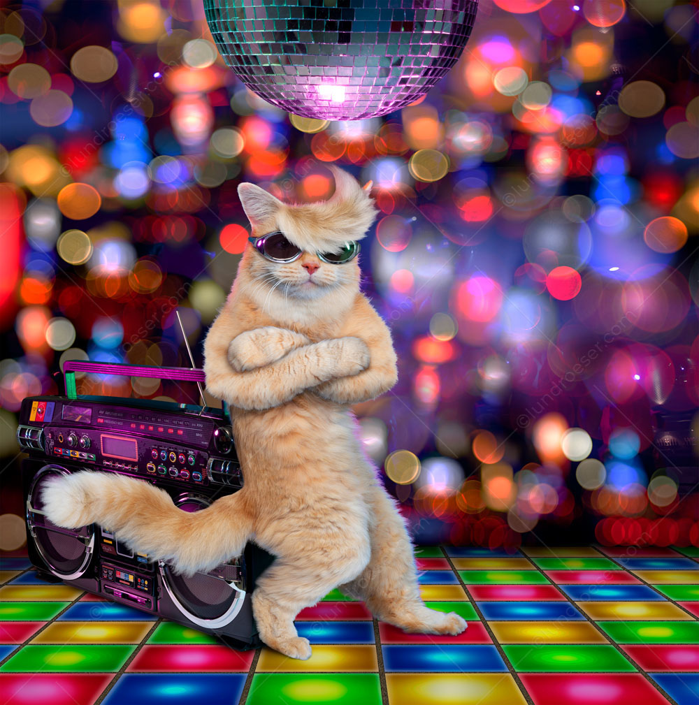 A funny cat, out clubbing, wearing shades, stands on a disco floor, beneath a disco ball and leaning on a boom box, and looks cool.