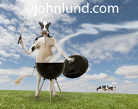 A Holstein dairy cow is standing behind a barbecue grill holding the lid in one hand and a grilling fork in the other in this funny cow picture.