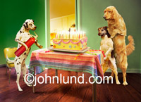 Birthday Cake On Fire! Picture of birthday candles being extinguished by three dogs using a fire extinguisher, a funny pet picture.