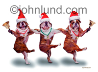 Funny picture of dancing Bulldogs for Xmas wearing Santa Hats and ringing bells. They are wearing ornament necklaces as they kick up thier heels.