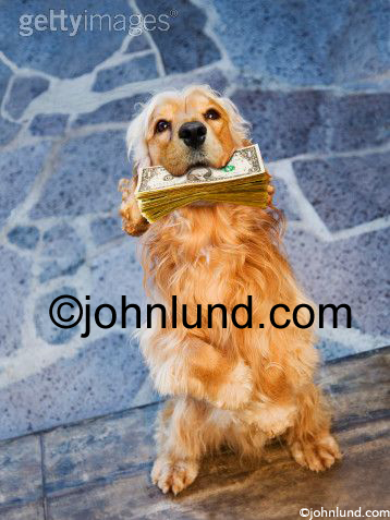 Stock photo of an animal with money in its mouth.  A Golden retreiver sits up and offers a bundle of cash to its master. A whole stack of dollars. Truly Mans Best Friend.