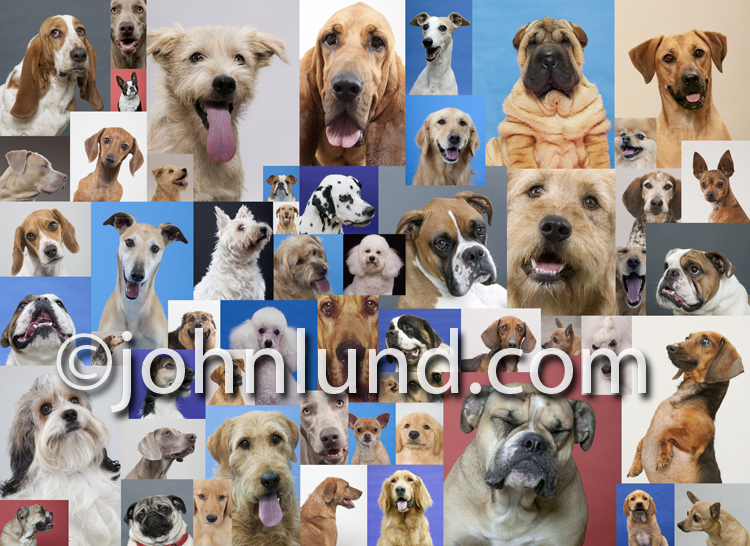 A mosaic of different dog breed portraits combined into a background breed poster including breeds such as Golden Retrievers, Bloodhounds, Jack Russell Terriers, German Shepherd, Poodles, Mutts and more.