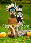 Funny picture  of thanksgiving dogs. This funny pet picture shows what good friends dogs and cats can be... especially around thanksgiving time. Great pet costumes and some pumpkins on the ground.