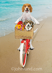 Happy mothers day! A beagle, and his puppy, ride a bike on a beach in a happy mother's day greeting card image.